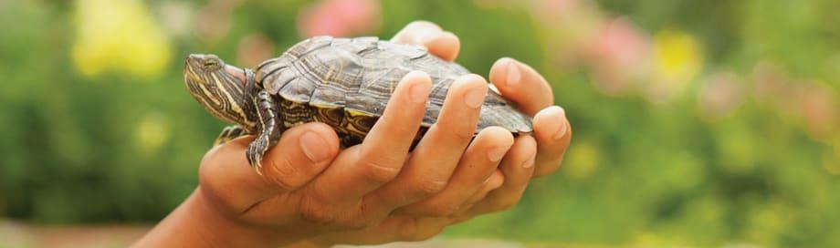 Turtle Fun Facts Petco