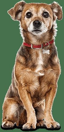 Petsafe Vibration Dog Bark Control Collar Petco