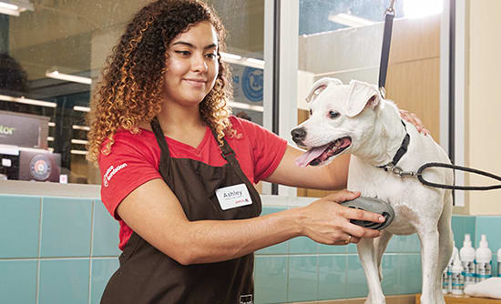 Becoming A Petco Certified Groomer Petco
