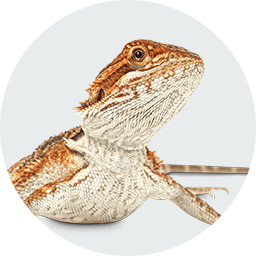 Reptile Store & Supply: Reptile Pet Shop & Supplies | Petco