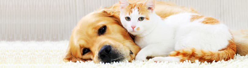 Quick Tips for Keeping Your Home and Pet Safe and Clean