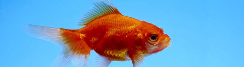 Fish Food And Feeding Tips Petco