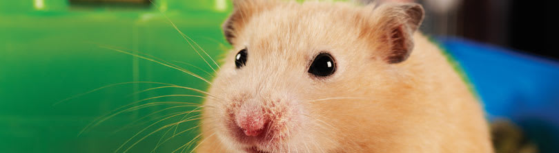 25 Fun Facts About Hamsters