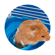 Small Animal Supplies: Products & Accessories for Small Animals ...