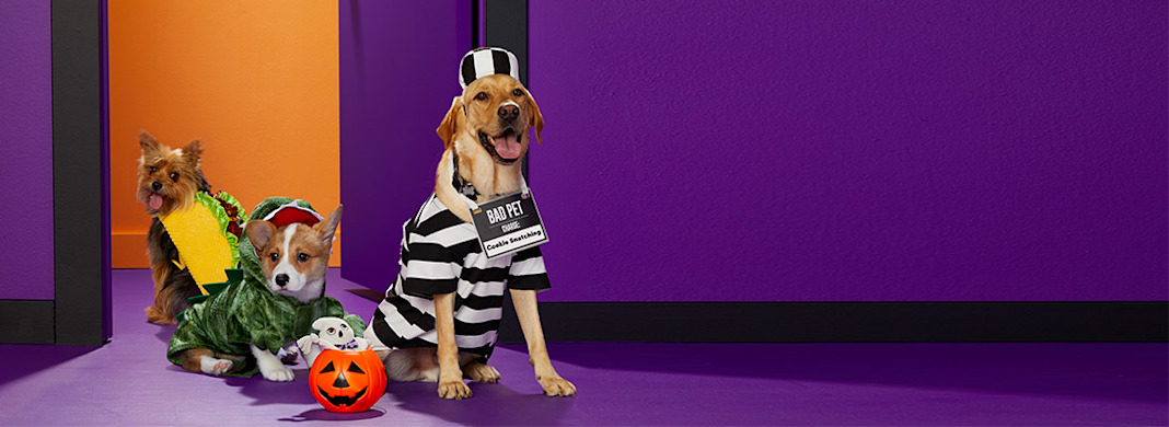 Three dogs wearing Halloween costumes.