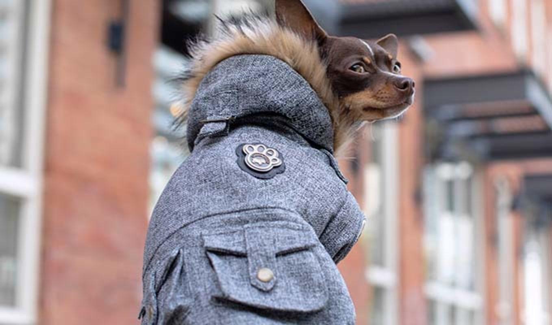 Small dog wearing a parka.