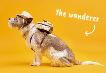 The Wanderer dog