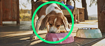 Dog eating out of bowl