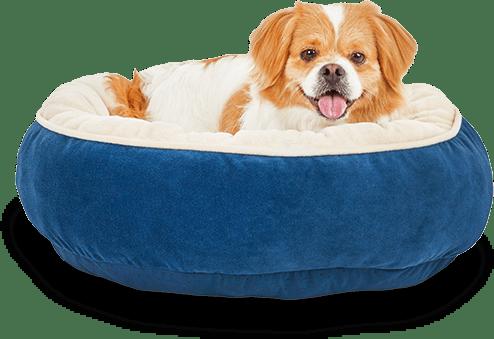 Dog in blue dog bed