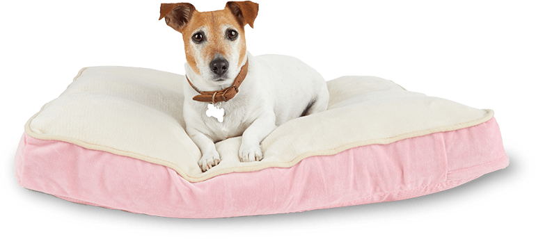 Dog in pink dog bed